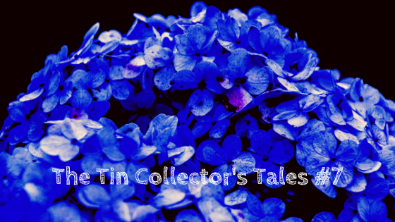 faded flowers, tin collector's tales #7, deep blue hydrangea, blue flowers, wilted blossoms, bouquet, roses, sad story, happy ending, prayer, care, encouragement, flowers